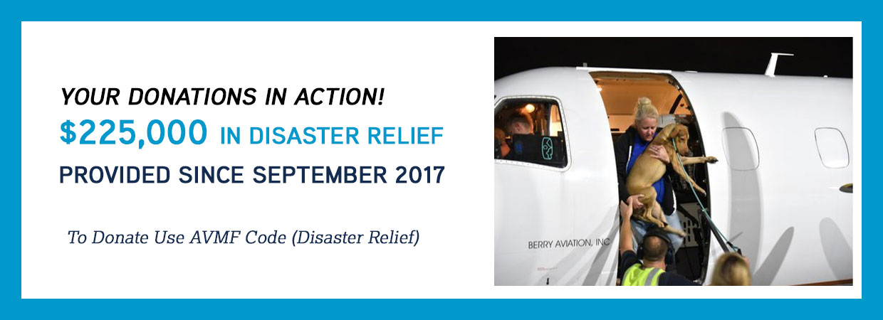 Disaster Relief 2